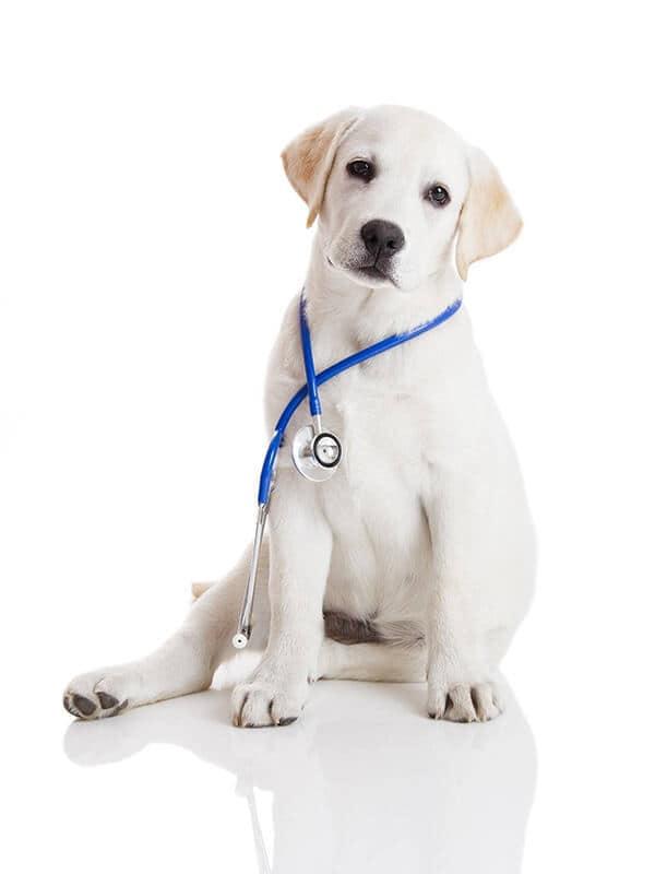 Milwaukee Pet Surgery