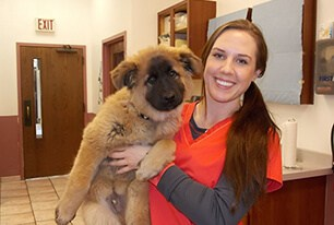 team member kaylin holding large puppy in office. Puppy has a tan body and a black face