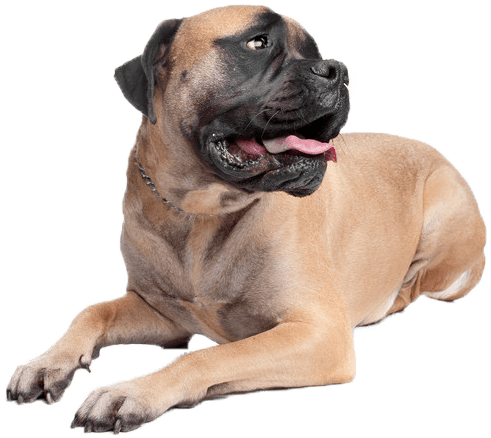 dog vaccinations in milwaukee, WI
